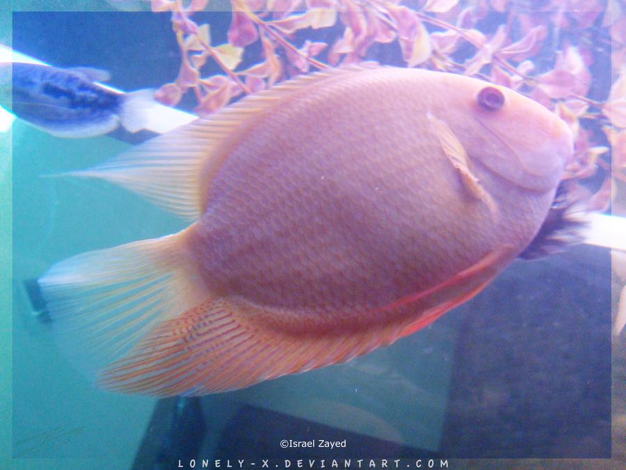 Tropical_Aquarium059_byIsraJZ by Lonely-X