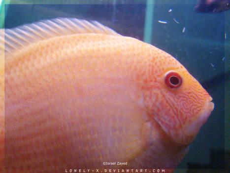 Tropical_Aquarium060_byIsraJZ