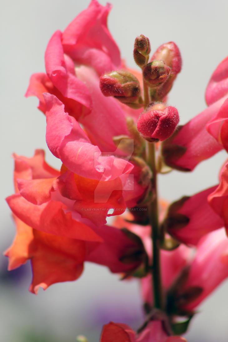 Coral Petals by LabyrinthFairie