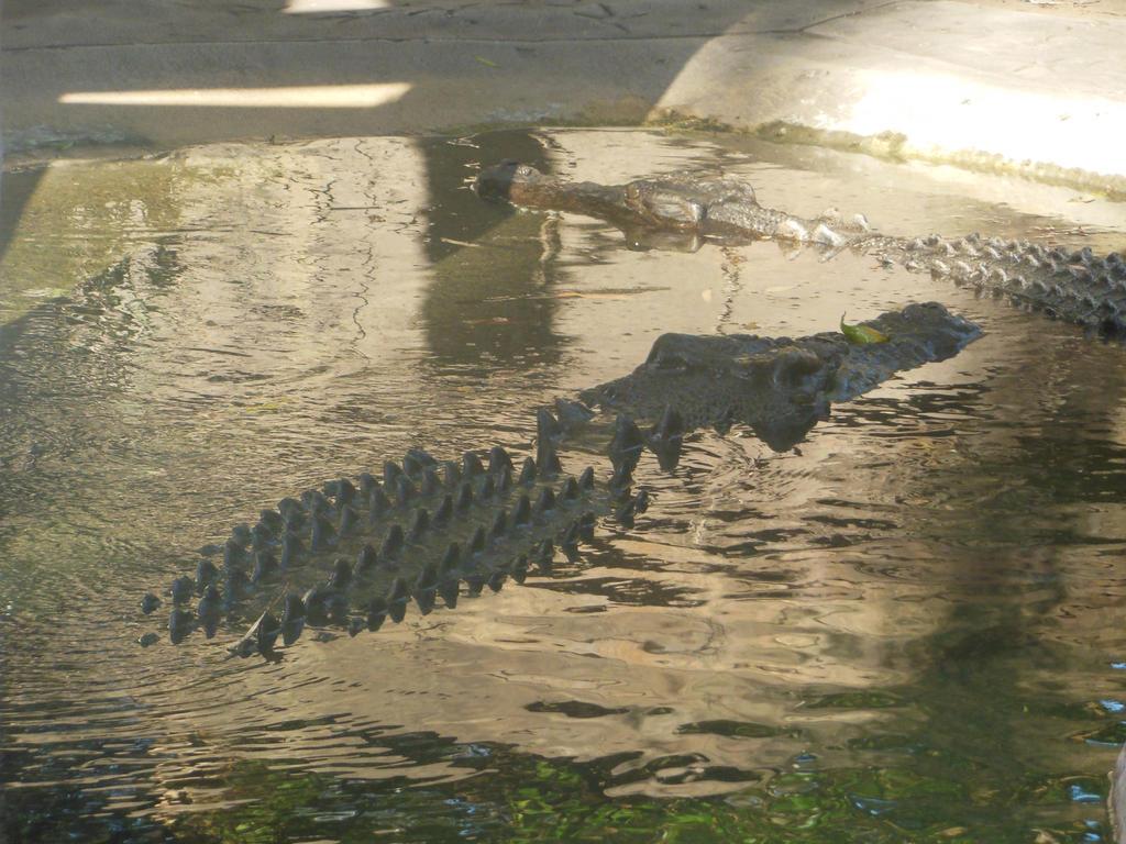 Crocodile Stock by BlackFireDesign