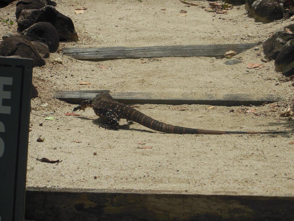 Lizard Stock by BlackFireDesign