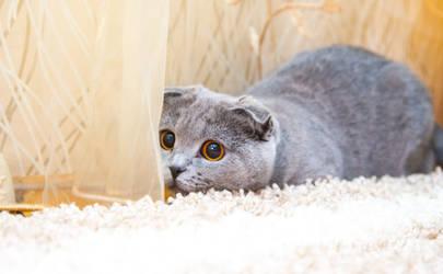 cat720