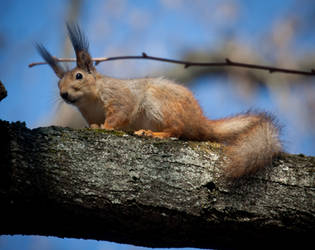 red_squirrel720 by Tiorion-ua