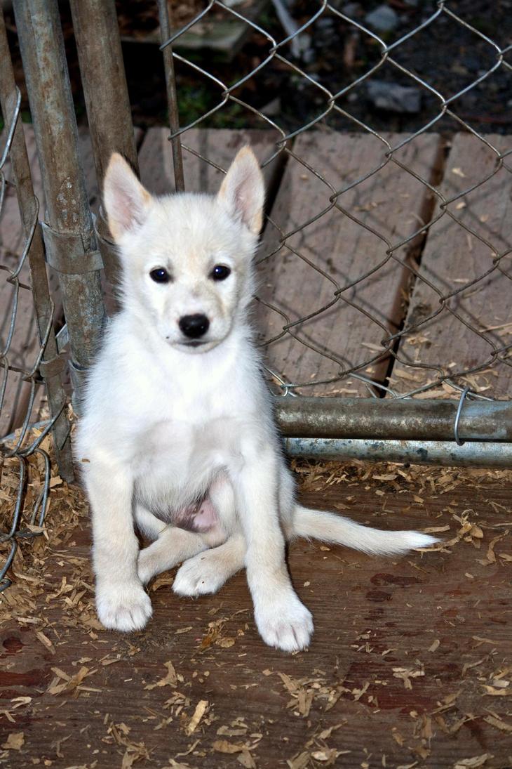 Dog Watch Anchorage