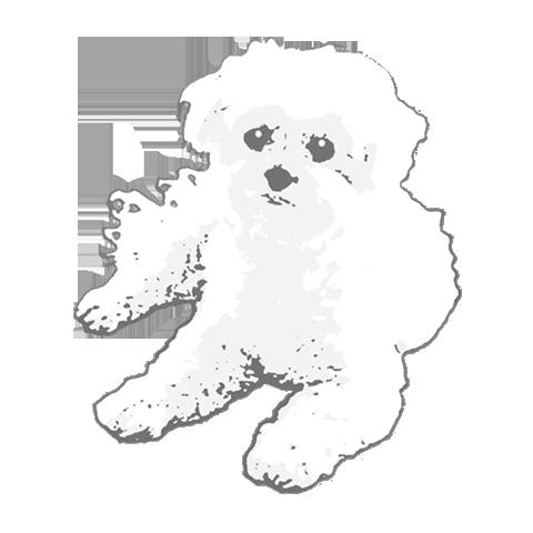 The Staring Dog by LazyThinker