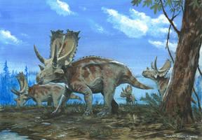 Horns17: Agujaceratops