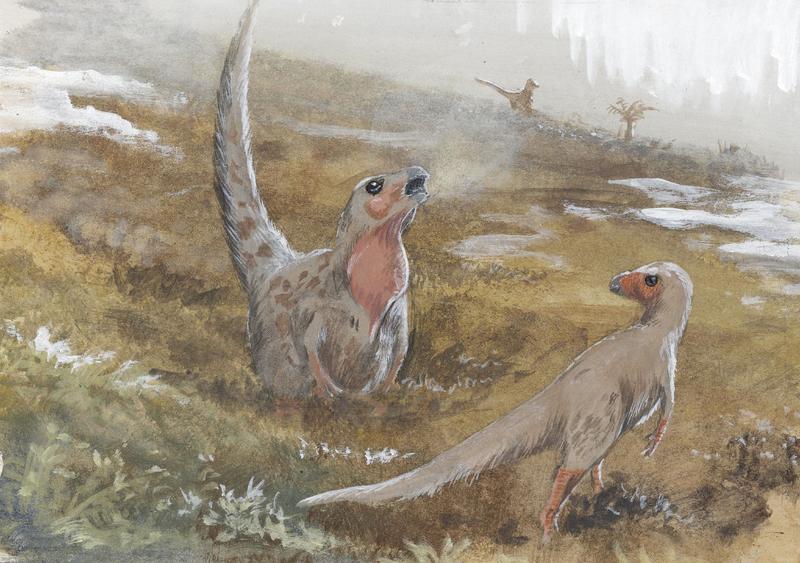 Trinisaura santamartaensis by tuomaskoivurinne