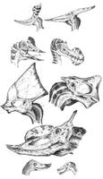 Miscellaneous Pterosaur heads by tuomaskoivurinne