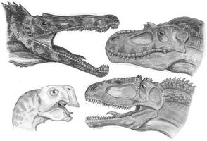 Heads of theropods 1 by tuomaskoivurinne