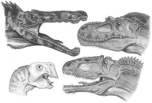 Heads of theropods 1