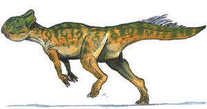 Leptoceratops gracilis