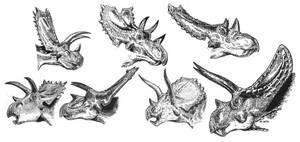 Ceratopsids 2 by tuomaskoivurinne