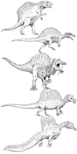 Spinosaurus 1915-2020 lineart