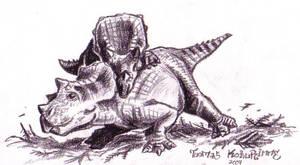 Triceratops horridus babies