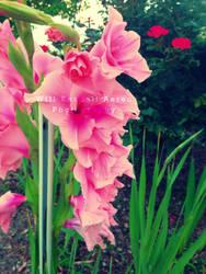 Flourishing Pink