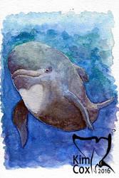 Happy little pilot whale by kasatkaorca