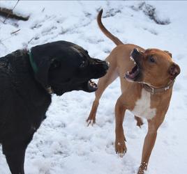 Stock: Dog Fight
