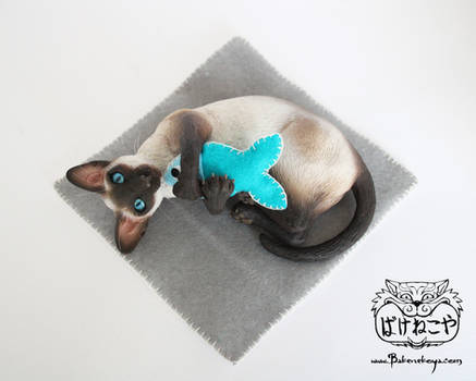Playing Siamese cat - seal point