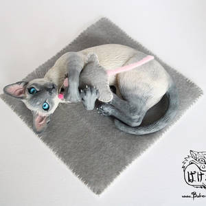 Playing Siamese cat - lilac point