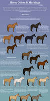 Equine Color and Markings Chart