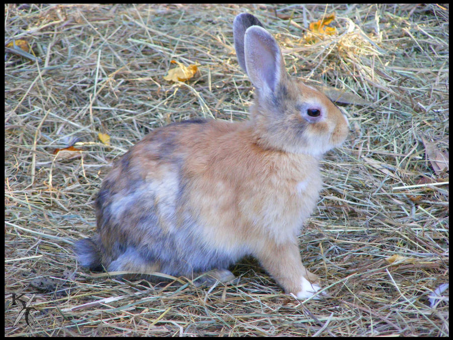 Funny Bunny by Katana-Tate