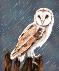 Barn Owl Updated