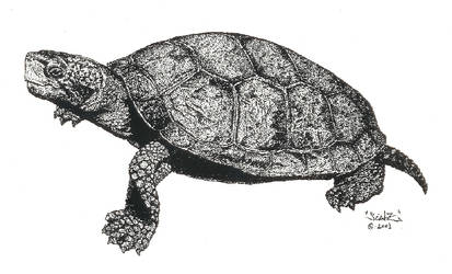 Western Pond Turtle by creativenature