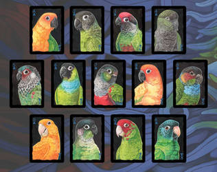 Parrots of the World: Conures