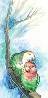 Lovebirds by maggock
