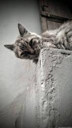 Pensive Furball by wiledog