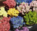 Rainbow Cactus