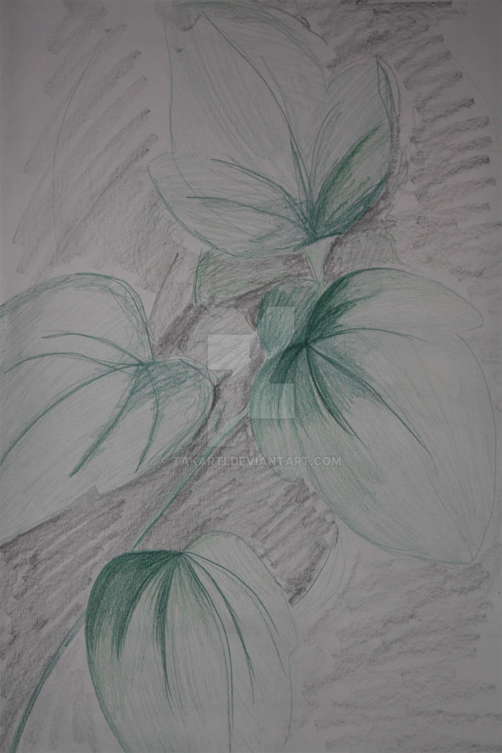 1. Developmental Drawing by Takarti