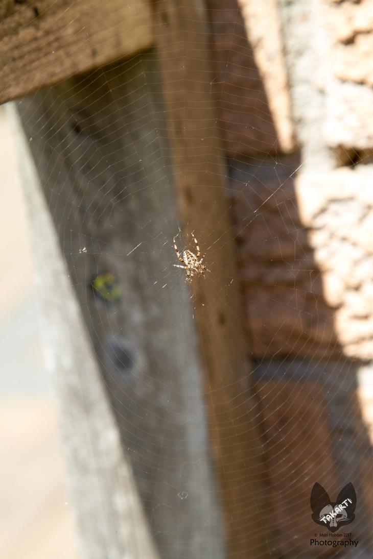 Spider by Takarti