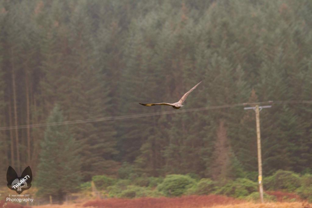 Glen Etive: Bird of Prey by Takarti