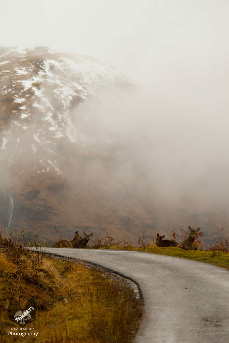 Scotland: Deer by Takarti
