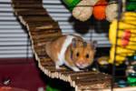 Bramble the Hamster