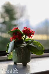 Week3: Flower by Takarti