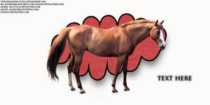 Ponybox Layout 024