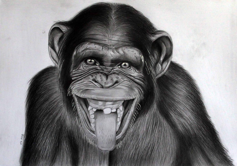 Cheeky Monkey by donchild on DeviantArt