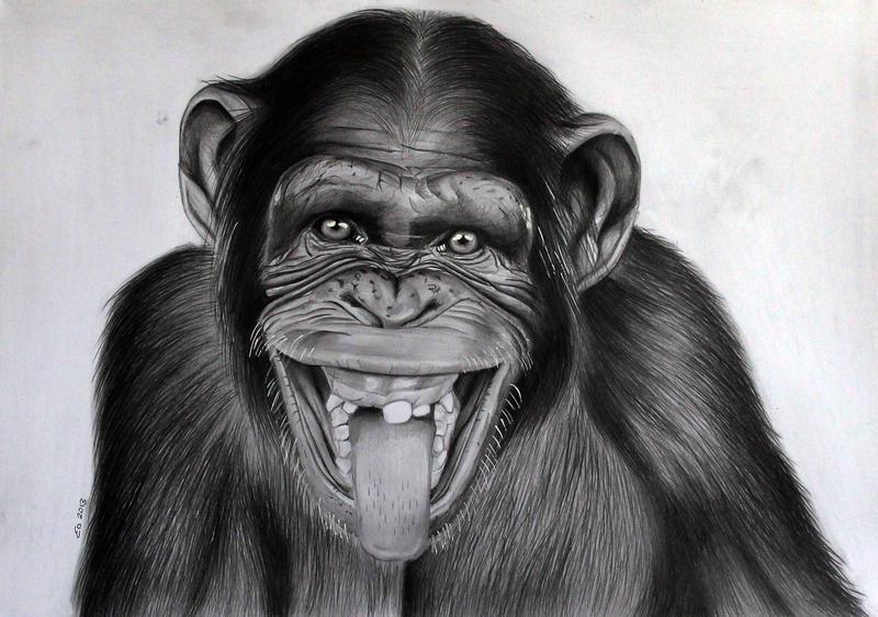 Pencil Drawings Of Monkeys