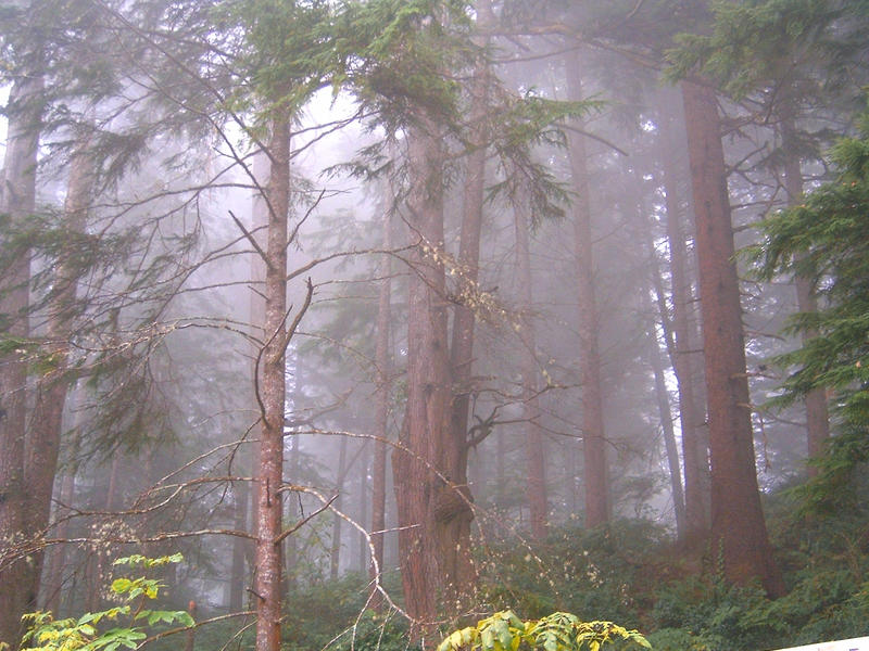 Foggy Forest I by ArtistStock
