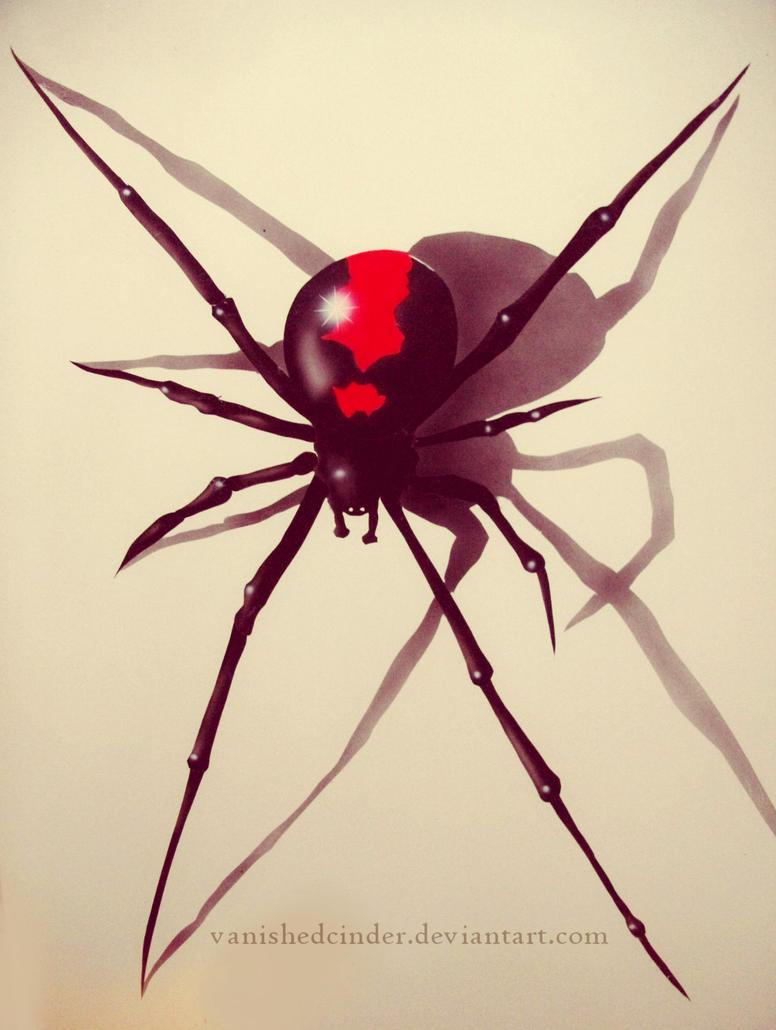 Redback Spider by Vani...