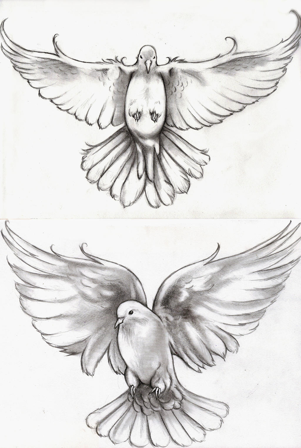 The Gallery For --u0026gt; Dove Tattoo Sketch