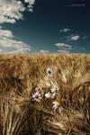 Fields Of Golden Wheat by ageofloss