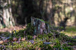 Old tree trunk overgrown with mosses and lichens