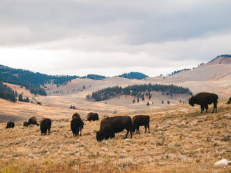 Valley of the Bison by Queen-Kitty