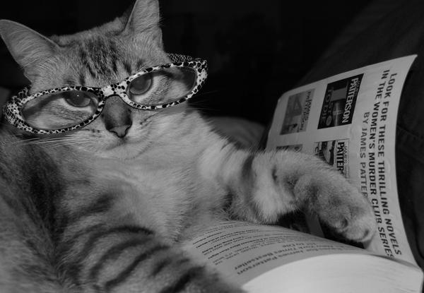 A Good Read by Queen-Kitty