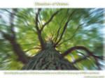 Wonders of Nature 2 by Telliria