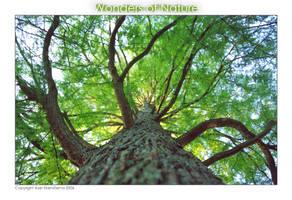 Wonders of Nature by Telliria