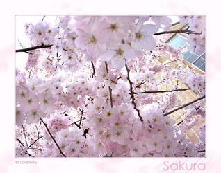Sakura by Telliria